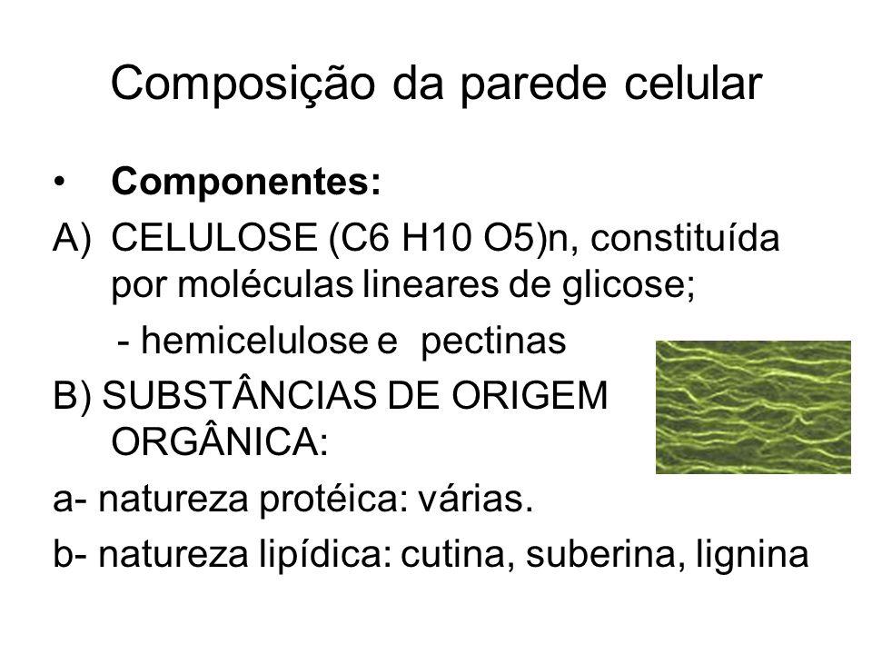 Composição da parede celular Componentes: A)CELULOSE (C6 H10 O5)n, constituída por moléculas lineares de glicose; - hemicelulose e pectinas B) SUBSTÂN