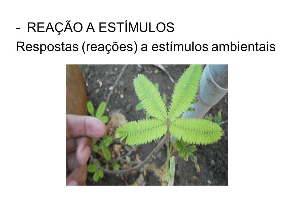 -REAÇÃO A ESTÍMULOS Respostas (reações) a estímulos ambientais