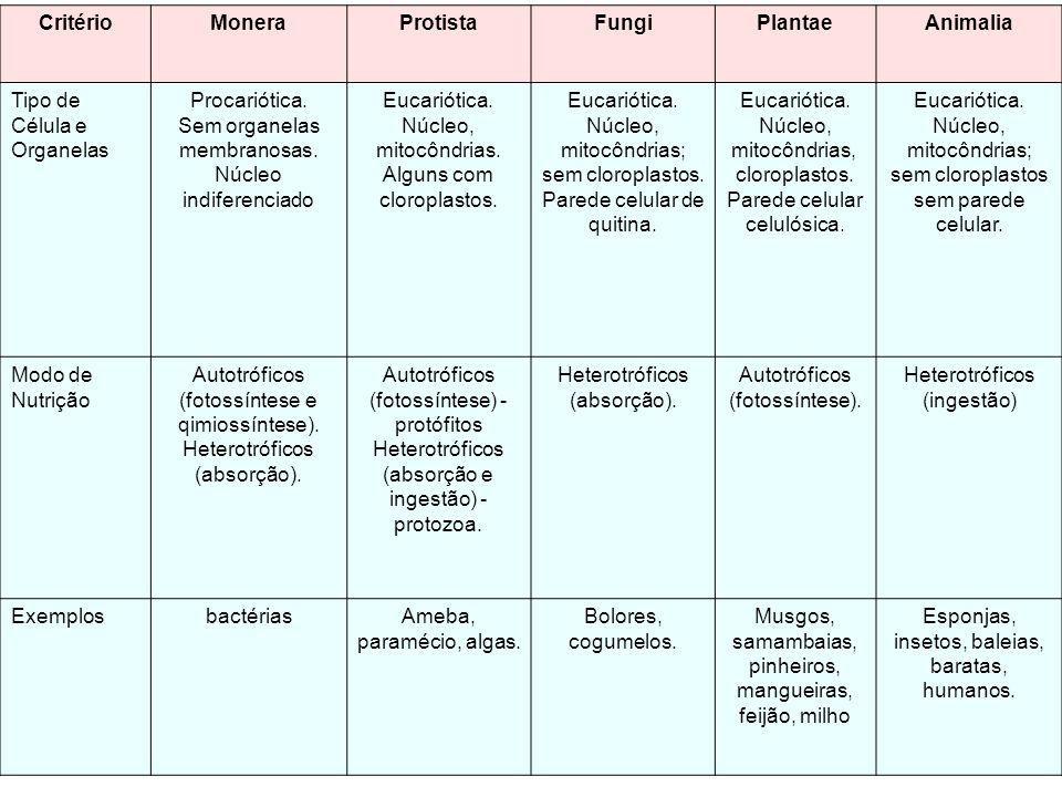 CritérioMoneraProtistaFungiPlantaeAnimalia Tipo de Célula e Organelas Procariótica. Sem organelas membranosas. Núcleo indiferenciado Eucariótica. Núcl