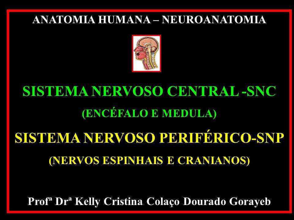 ANATOMIA HUMANA – NEUROANATOMIA SISTEMA NERVOSO CENTRAL -SNC (ENCÉFALO E MEDULA) SISTEMA NERVOSO PERIFÉRICO-SNP (NERVOS ESPINHAIS E CRANIANOS) Profª Drª Kelly Cristina Colaço Dourado Gorayeb