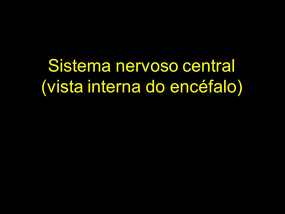 Sistema nervoso central (vista interna do encéfalo)