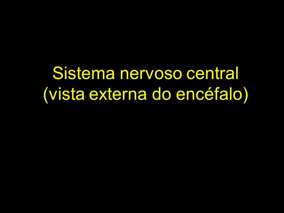 Bibliografia utilizada MACHADO, A.B.M. Neuroanatomia funcional.
