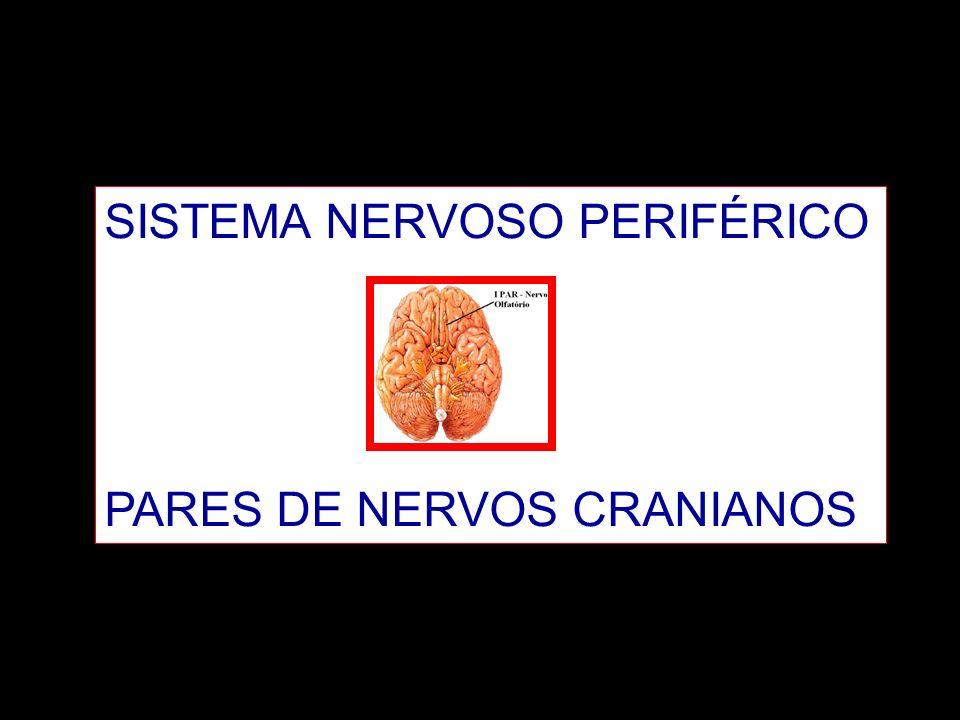 SISTEMA NERVOSO PERIFÉRICO PARES DE NERVOS CRANIANOS