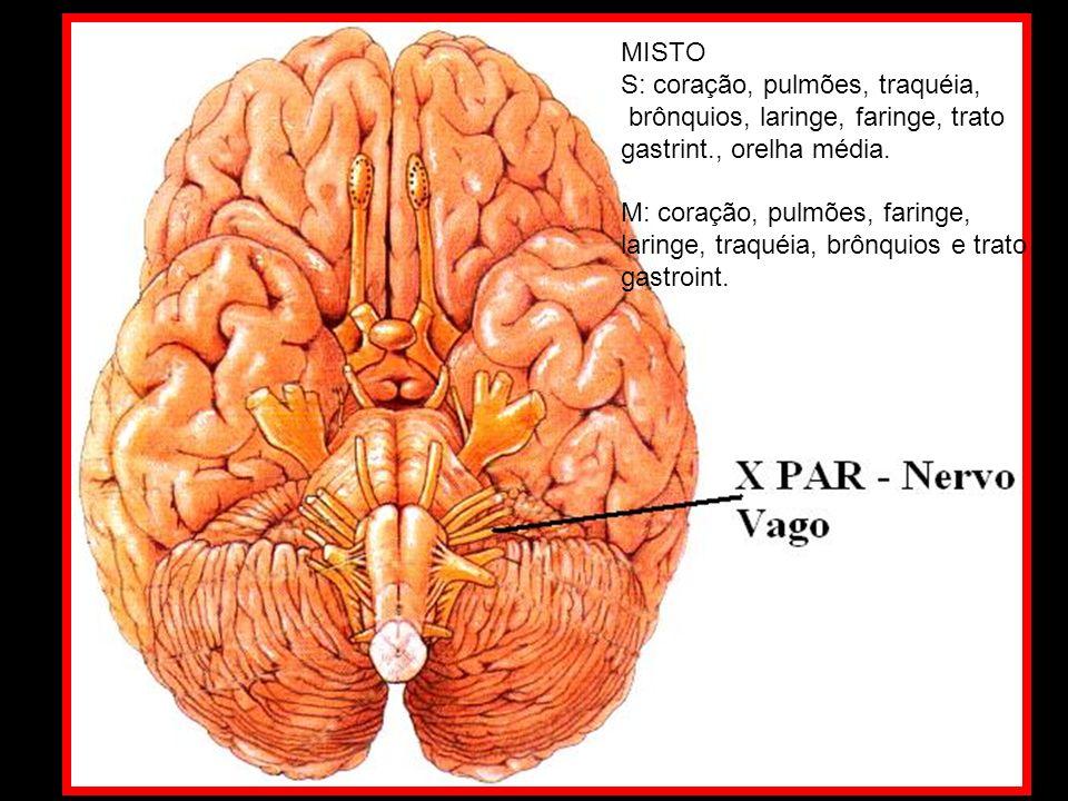 MISTO S: coração, pulmões, traquéia, brônquios, laringe, faringe, trato gastrint., orelha média.