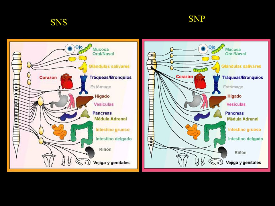SNS SNP