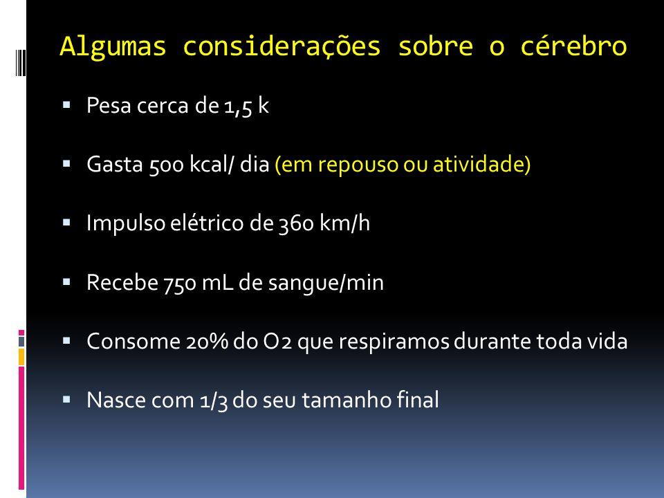 Algumas considerações sobre o cérebro Pesa cerca de 1,5 k Gasta 500 kcal/ dia (em repouso ou atividade) Impulso elétrico de 360 km/h Recebe 750 mL de