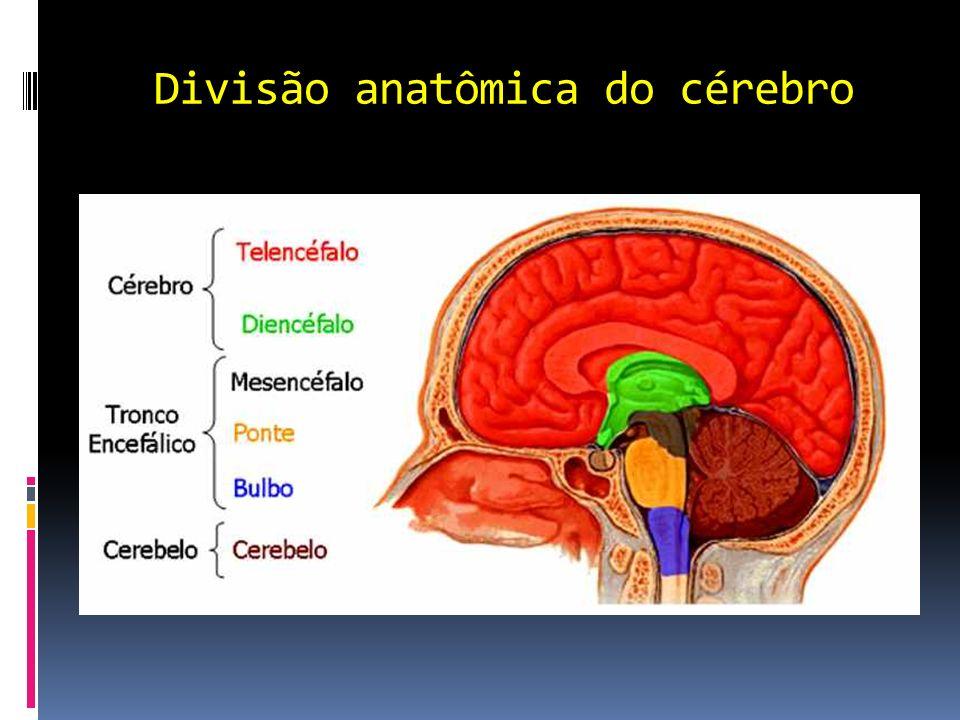 Habilidades cerebrais Reativação: (é uma habilidade básica do cérebro) Capacidade para escolhas e decisões.