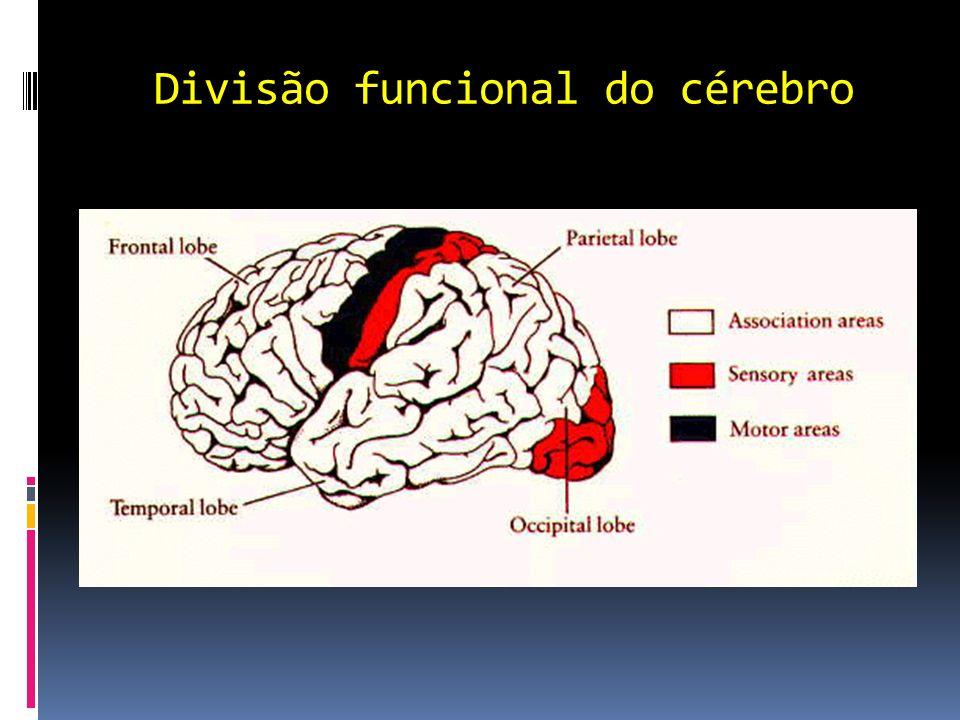 Habilidades cerebrais Emoção: expressão do corpo em resposta ao conteúdo da memória.