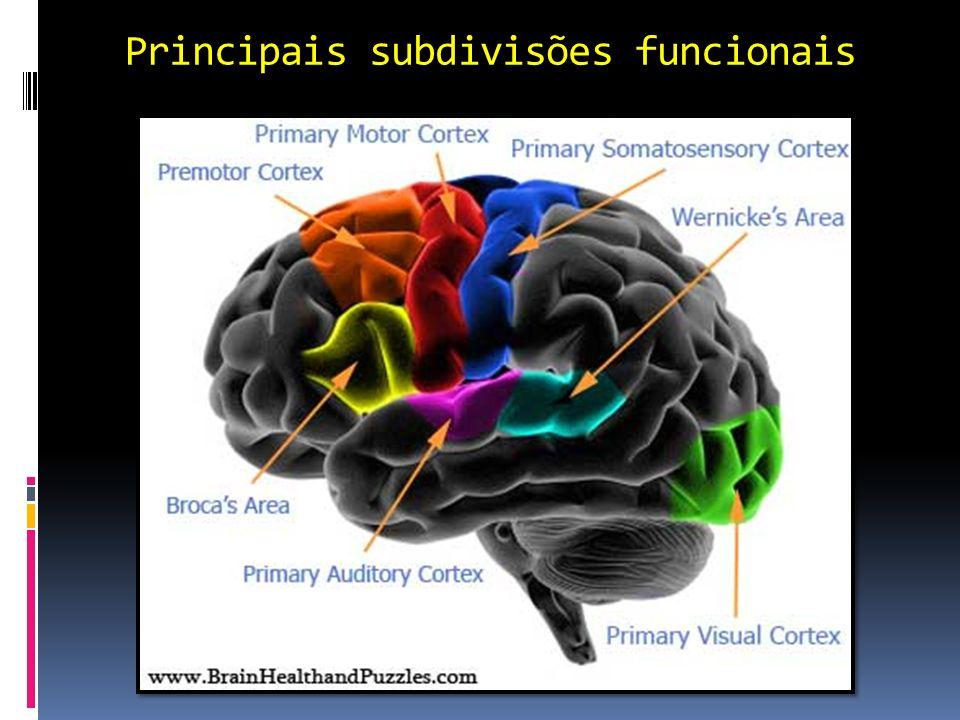 Principais subdivisões funcionais