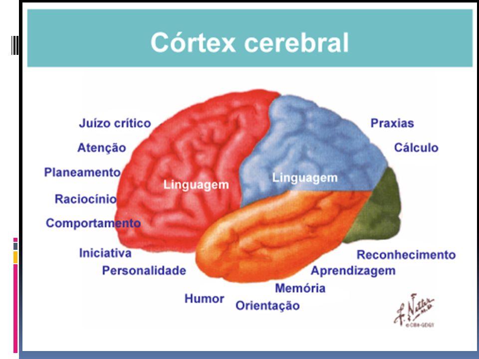 Conclusão Seu cérebro pode ser o que você quiser que ele seja, pois ele depende de suas experiências, cuidados e demandas durante toda sua vida.