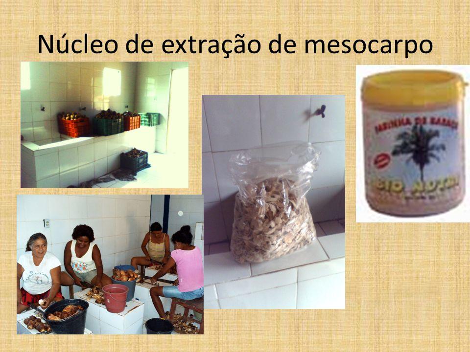 Núcleo de extração de mesocarpo