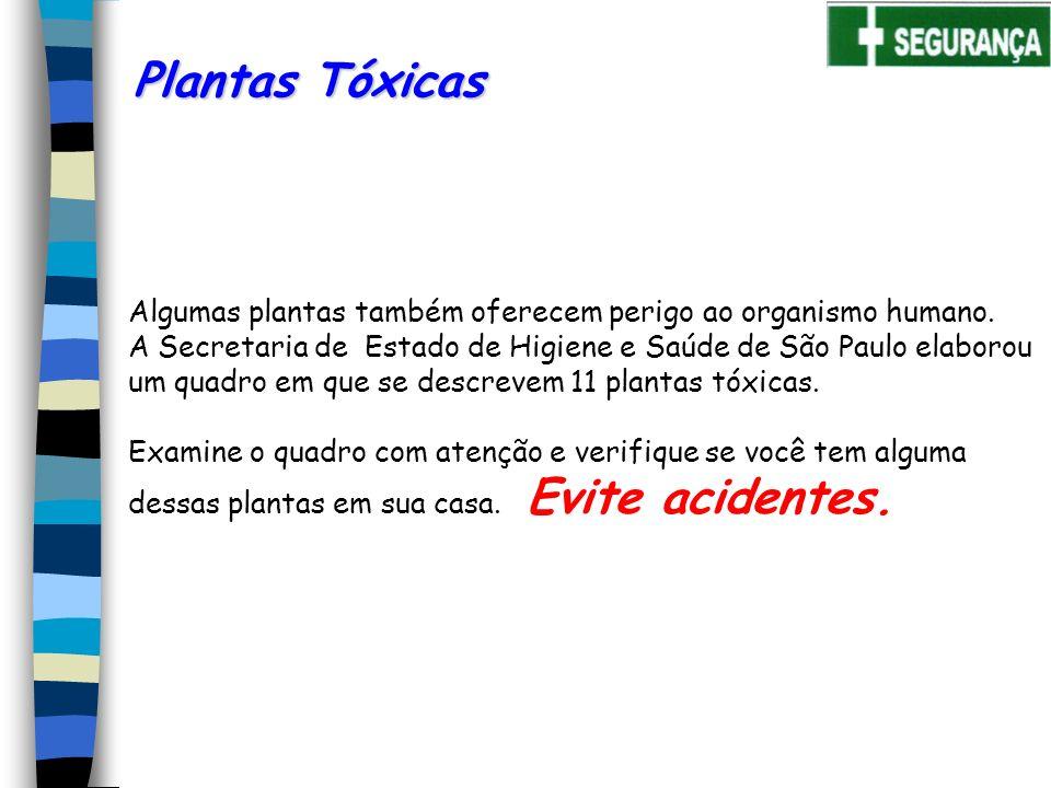 Plantas Tóxicas Algumas plantas também oferecem perigo ao organismo humano.