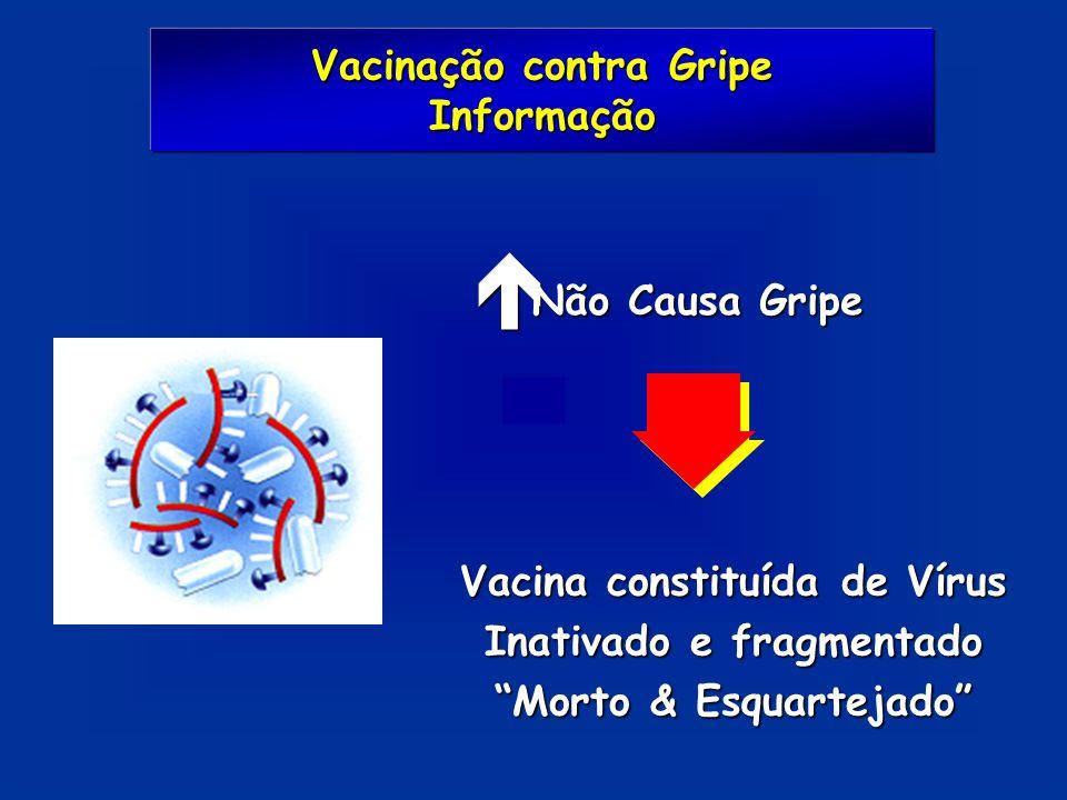 é Não Causa Gripe Vacina constituída de Vírus Inativado e fragmentado Morto & Esquartejado Vacinação contra Gripe Informação