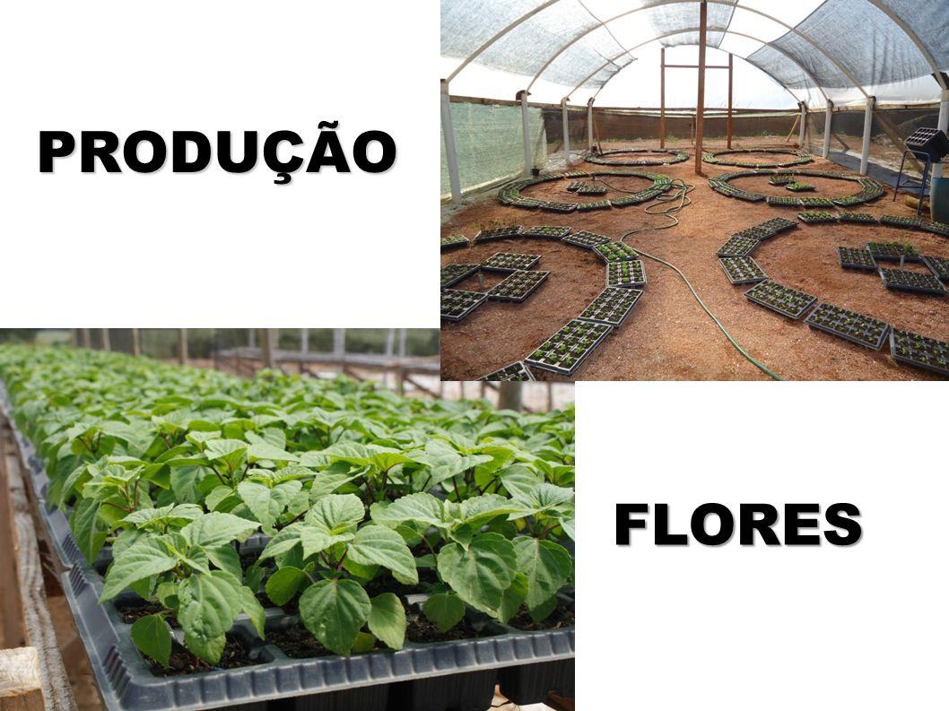 PRODUÇÃO FLORES