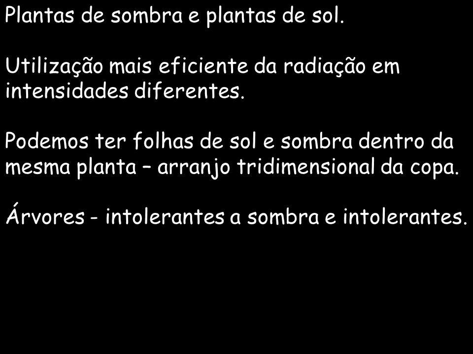 Plantas de sombra e plantas de sol. Utilização mais eficiente da radiação em intensidades diferentes. Podemos ter folhas de sol e sombra dentro da mes