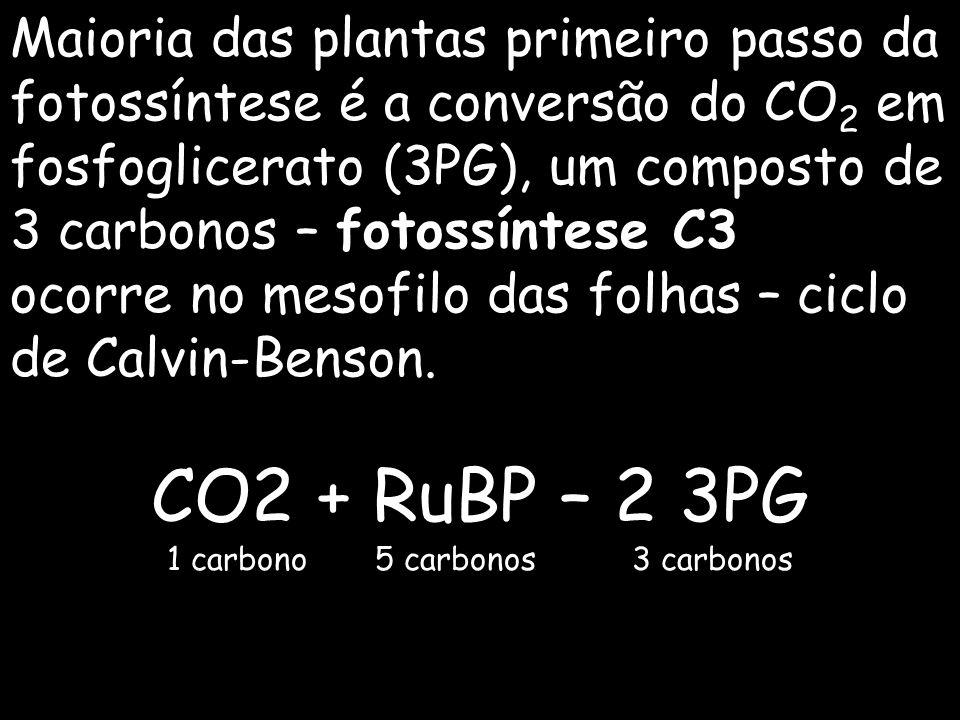 Maioria das plantas primeiro passo da fotossíntese é a conversão do CO 2 em fosfoglicerato (3PG), um composto de 3 carbonos – fotossíntese C3 ocorre n