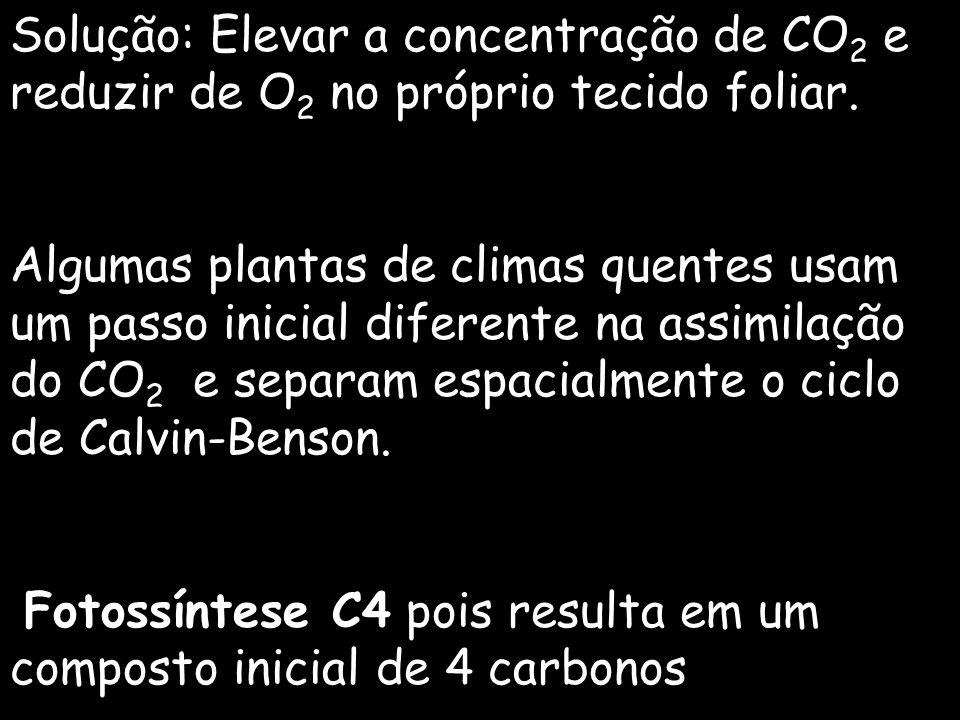Solução: Elevar a concentração de CO 2 e reduzir de O 2 no próprio tecido foliar. Algumas plantas de climas quentes usam um passo inicial diferente na