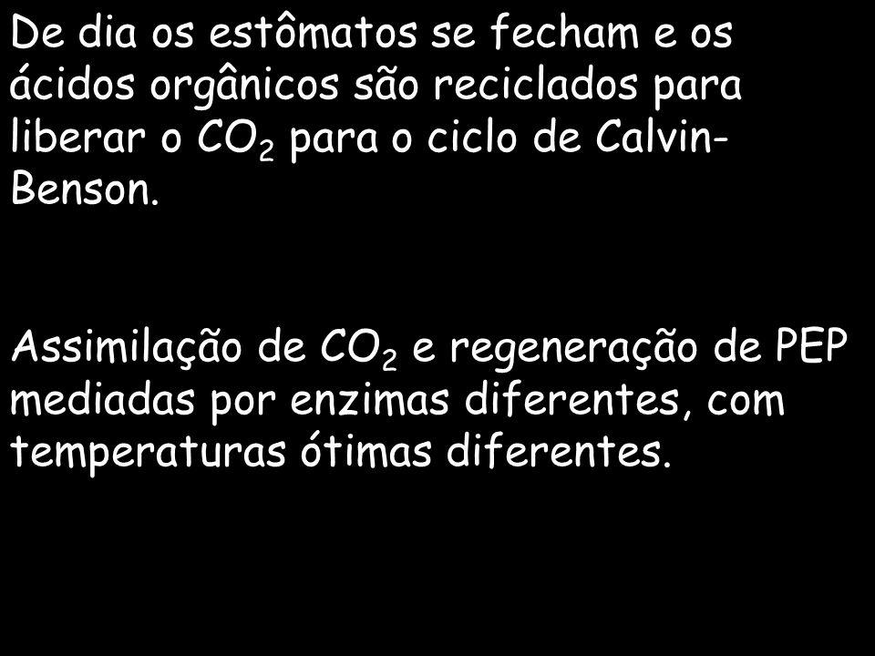 De dia os estômatos se fecham e os ácidos orgânicos são reciclados para liberar o CO 2 para o ciclo de Calvin- Benson. Assimilação de CO 2 e regeneraç