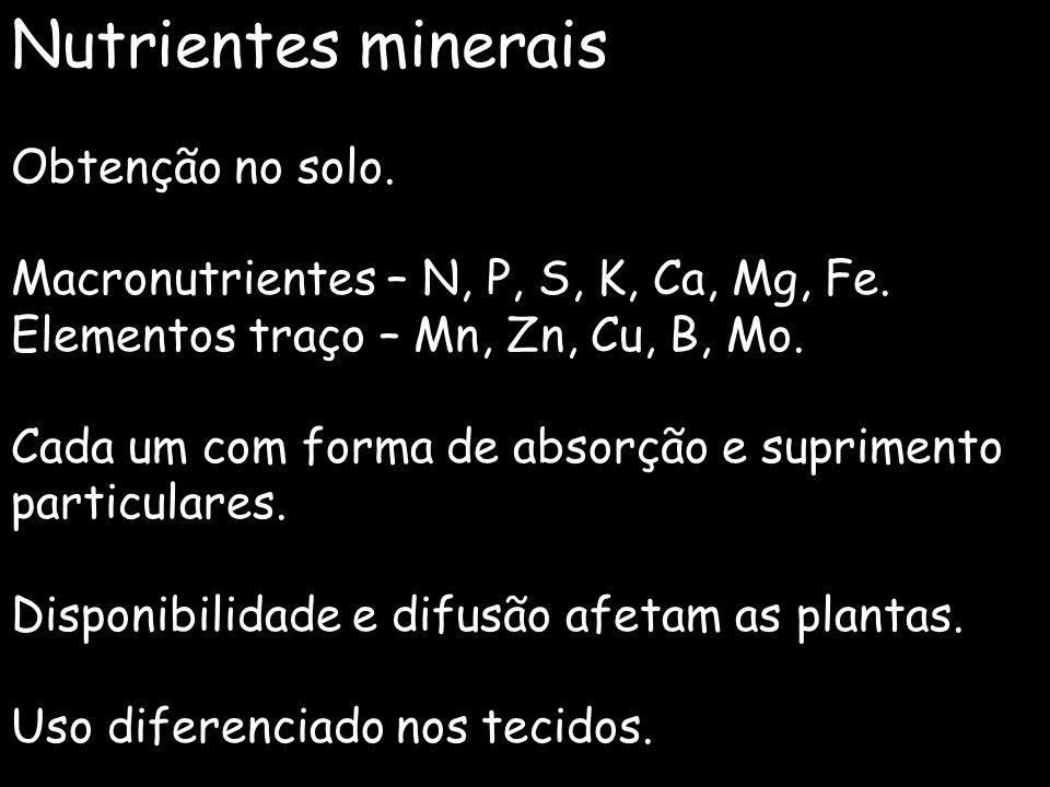 Nutrientes minerais Obtenção no solo. Macronutrientes – N, P, S, K, Ca, Mg, Fe. Elementos traço – Mn, Zn, Cu, B, Mo. Cada um com forma de absorção e s