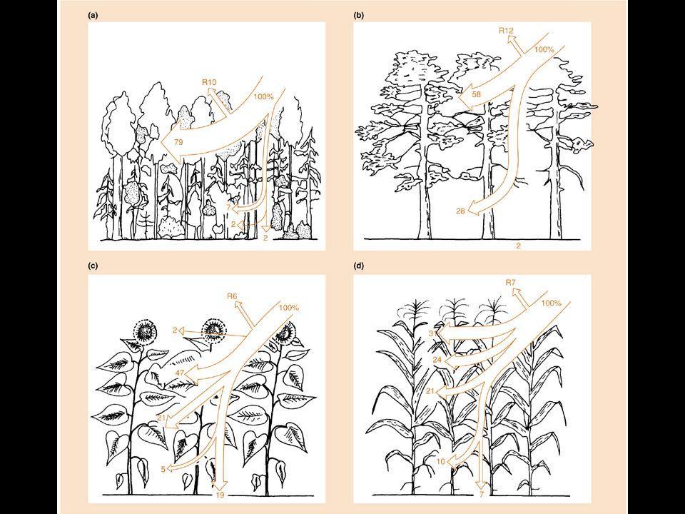 Plantas de desertos e ambientes salinos podem ter potenciais de até – 60 atm, pela concentração de aminoácidos, carboidratos ou ácidos orgânicos.