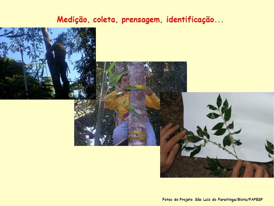 Medição, coleta, prensagem, identificação... Fotos do Projeto São Luiz do Paraitinga/Biota/FAPESP