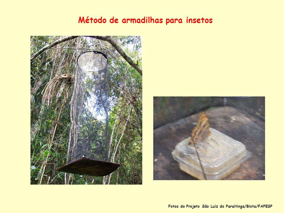 Método de armadilhas para insetos Fotos do Projeto São Luiz do Paraitinga/Biota/FAPESP