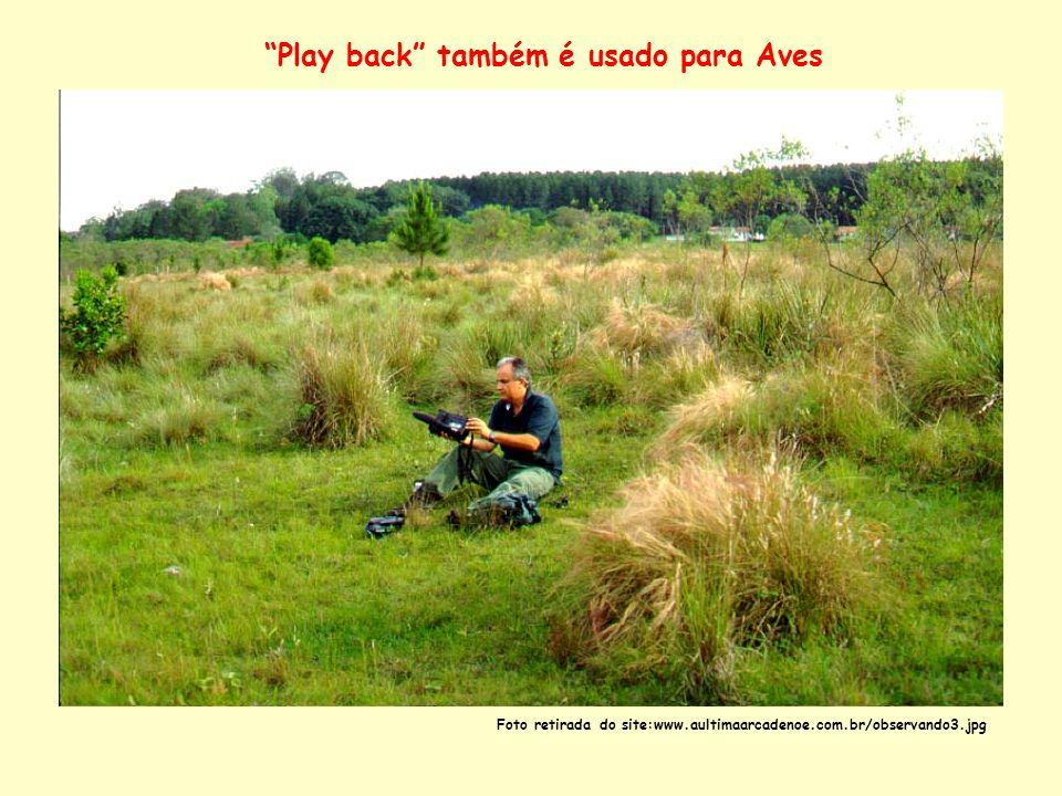 Play back também é usado para Aves Foto retirada do site:www.aultimaarcadenoe.com.br/observando3.jpg