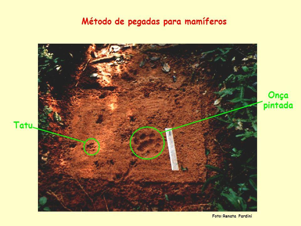 Método de pegadas para mamíferos Onça pintada Tatu Foto:Renata Pardini