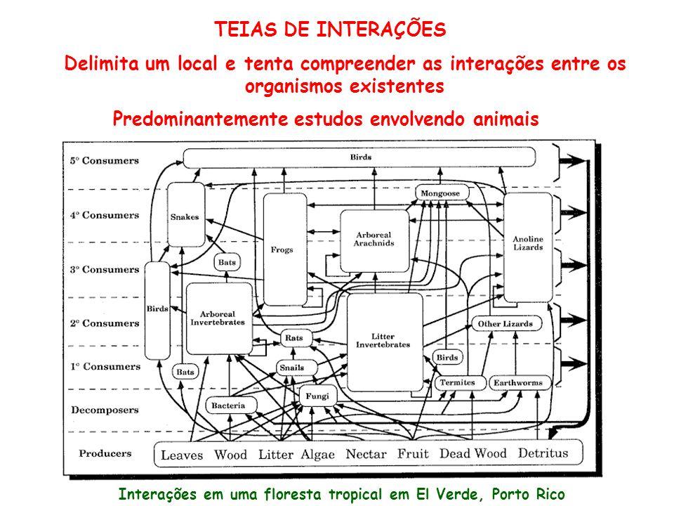 TEIAS DE INTERAÇÕES Delimita um local e tenta compreender as interações entre os organismos existentes Predominantemente estudos envolvendo animais In