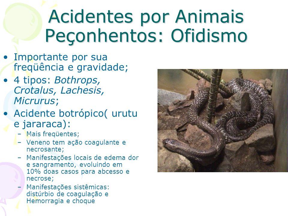 Acidentes por Animais Peçonhentos: Ofidismo Importante por sua freqüência e gravidade; 4 tipos: Bothrops, Crotalus, Lachesis, Micrurus; Acidente botró