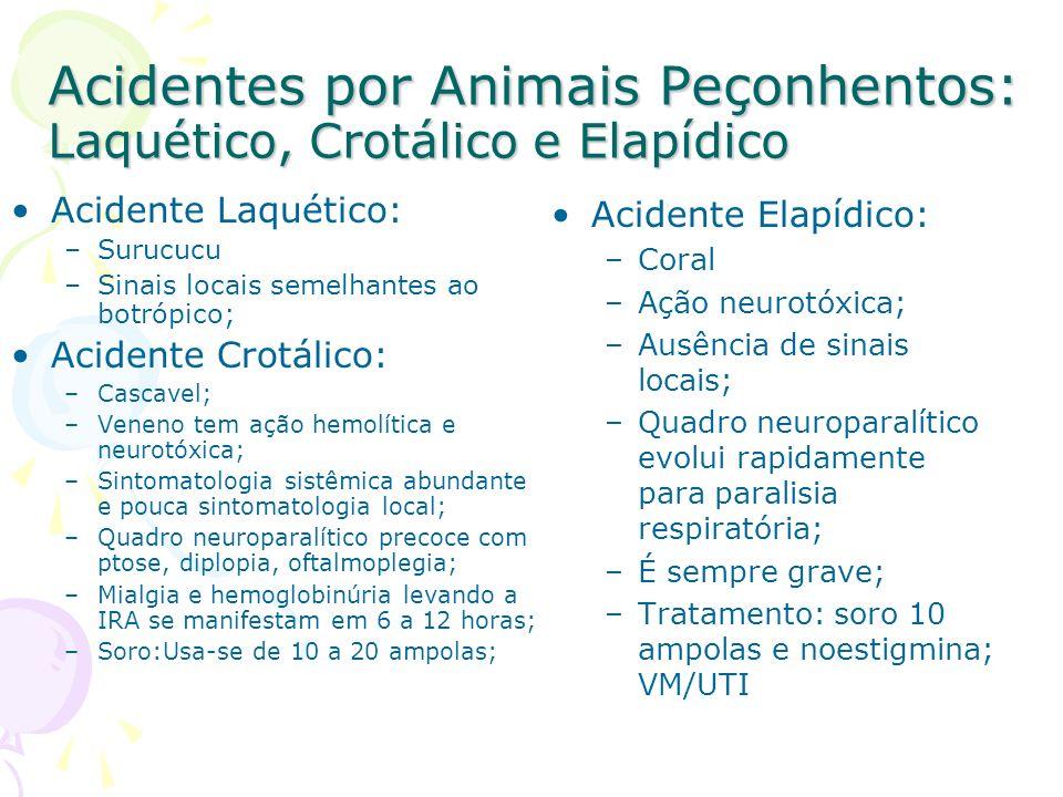 Acidentes por Animais Peçonhentos: Laquético, Crotálico e Elapídico Acidente Laquético: –Surucucu –Sinais locais semelhantes ao botrópico; Acidente Cr