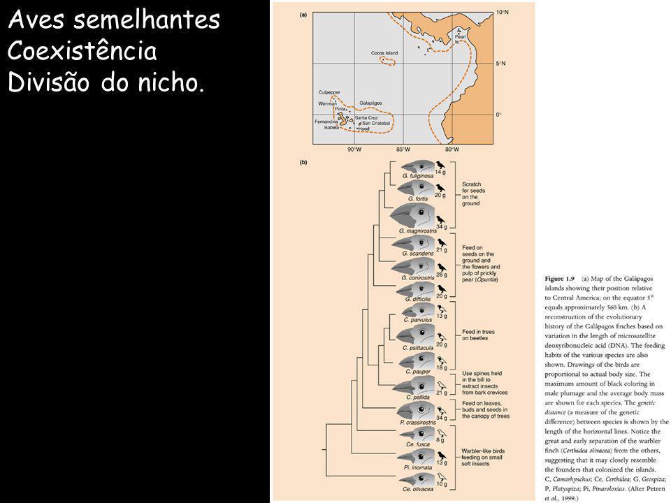 Aves semelhantes Coexistência Divisão do nicho.