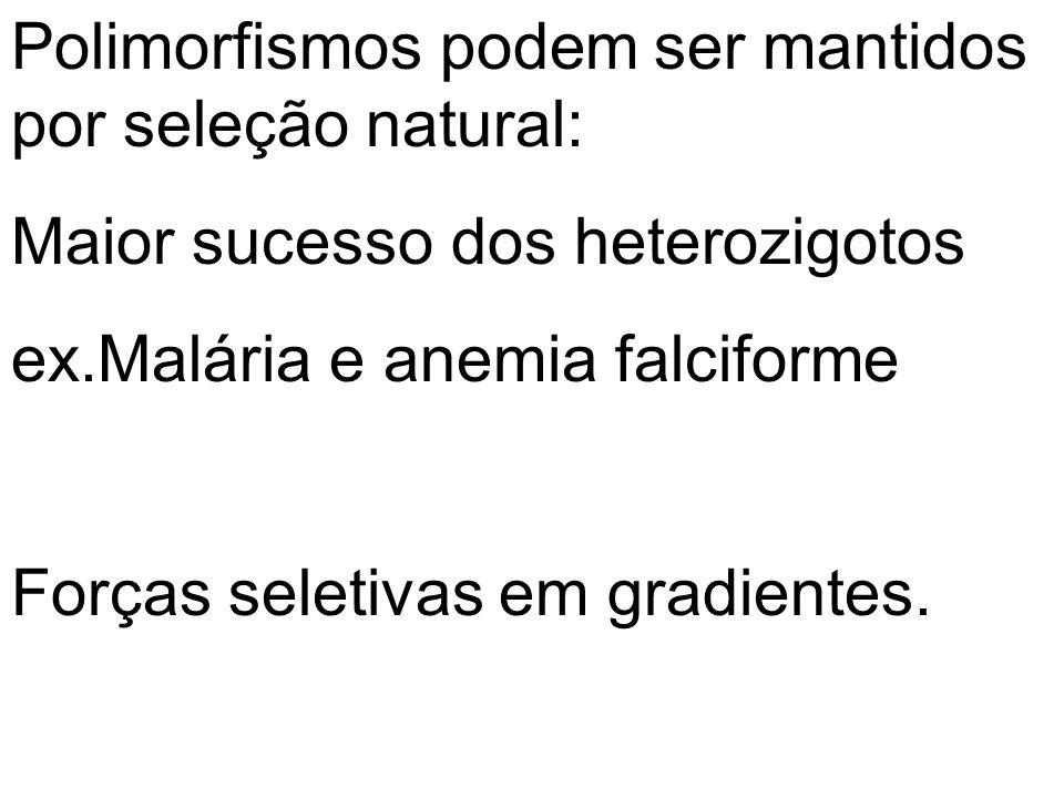 Polimorfismos podem ser mantidos por seleção natural: Maior sucesso dos heterozigotos ex.Malária e anemia falciforme Forças seletivas em gradientes.