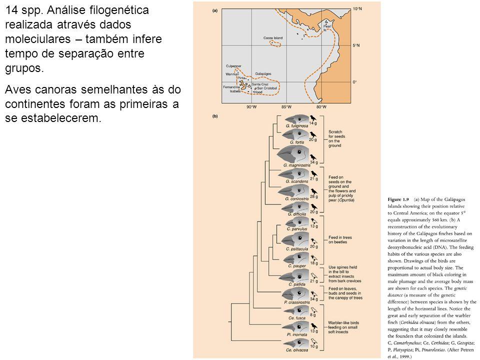 14 spp. Análise filogenética realizada através dados moleciulares – também infere tempo de separação entre grupos. Aves canoras semelhantes às do cont