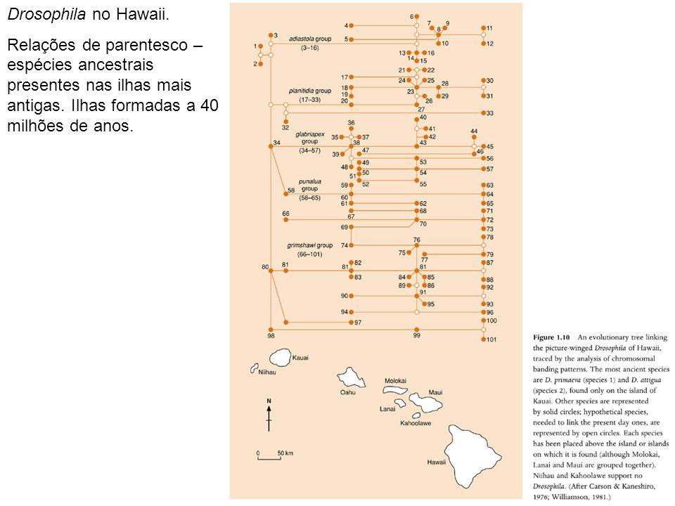 Drosophila no Hawaii. Relações de parentesco – espécies ancestrais presentes nas ilhas mais antigas. Ilhas formadas a 40 milhões de anos.