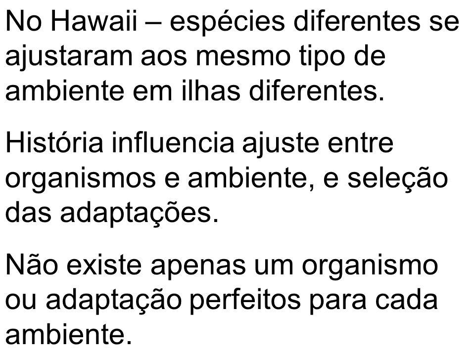 No Hawaii – espécies diferentes se ajustaram aos mesmo tipo de ambiente em ilhas diferentes. História influencia ajuste entre organismos e ambiente, e