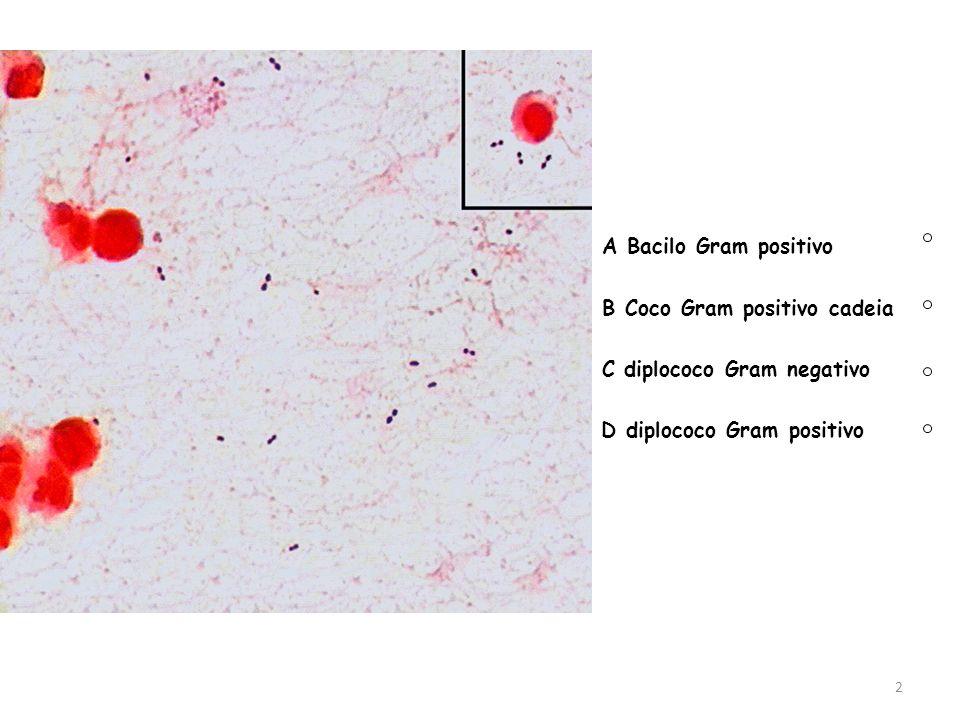 A Bacilo Gram positivo B Coco Gram positivo cadeia C diplococo Gram negativo D diplococo Gram positivo 2