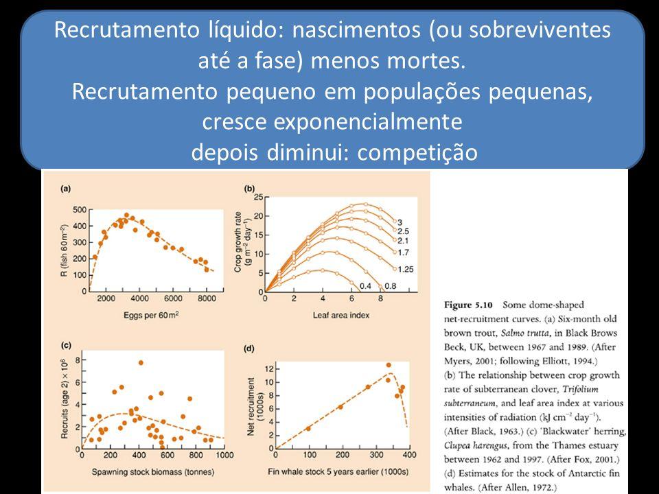 Recrutamento líquido: nascimentos (ou sobreviventes até a fase) menos mortes. Recrutamento pequeno em populações pequenas, cresce exponencialmente dep