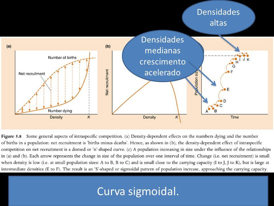 Área desocupada Densidades medianas crescimento acelerado Densidades altas Curva sigmoidal.