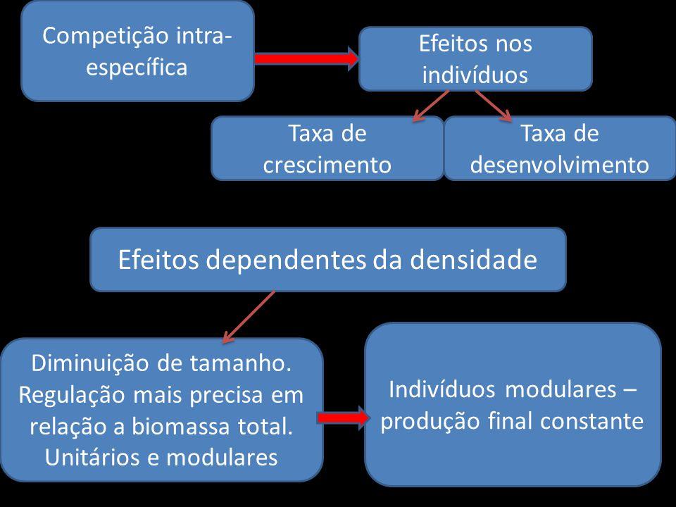 Competição intra- específica Efeitos nos indivíduos Taxa de crescimento Taxa de desenvolvimento Efeitos dependentes da densidade Diminuição de tamanho
