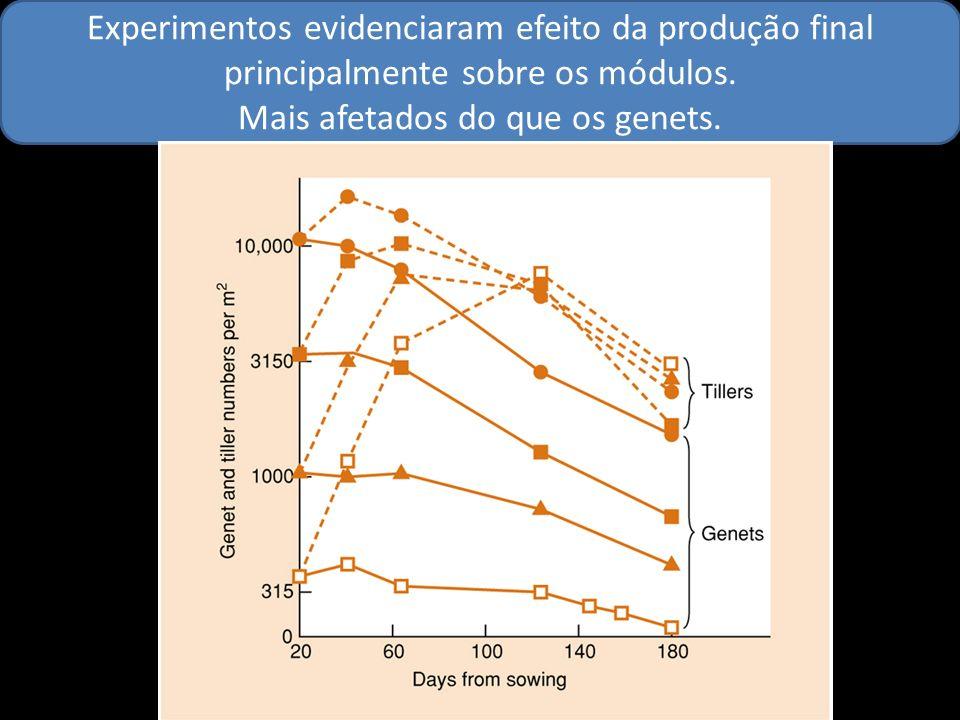 Experimentos evidenciaram efeito da produção final principalmente sobre os módulos. Mais afetados do que os genets.