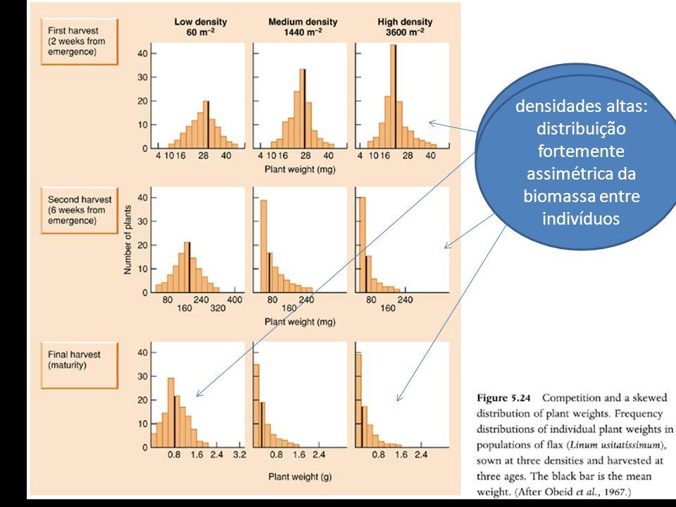 Início e densidades baixas : distribuição simétrica em torno da média densidades altas: distribuição fortemente assimétrica da biomassa entre indivídu