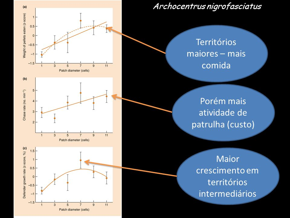 Territórios maiores – mais comida Porém mais atividade de patrulha (custo) Maior crescimento em territórios intermediários Archocentrus nigrofasciatus