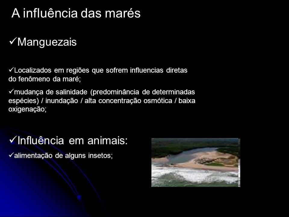 A influência das marés Manguezais Localizados em regiões que sofrem influencias diretas do fenômeno da maré; mudança de salinidade (predominância de d