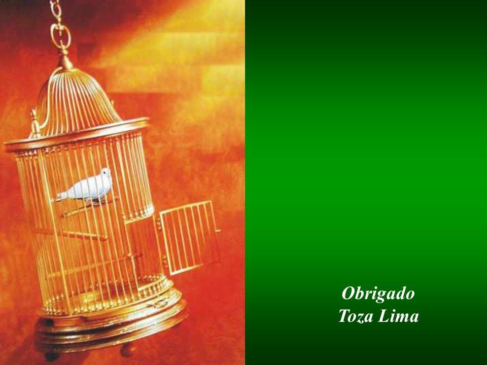 Obrigado Toza Lima