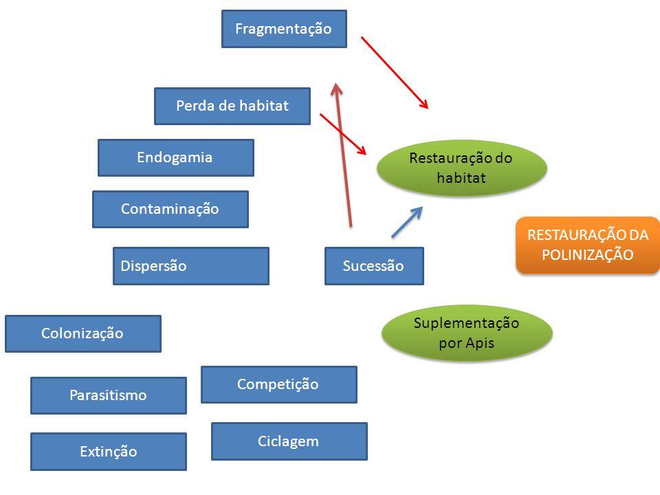 RESTAURAÇÃO DA POLINIZAÇÃO Fragmentação Perda de habitat Contaminação DispersãoSucessão Competição Ciclagem Endogamia Colonização Parasitismo Extinção