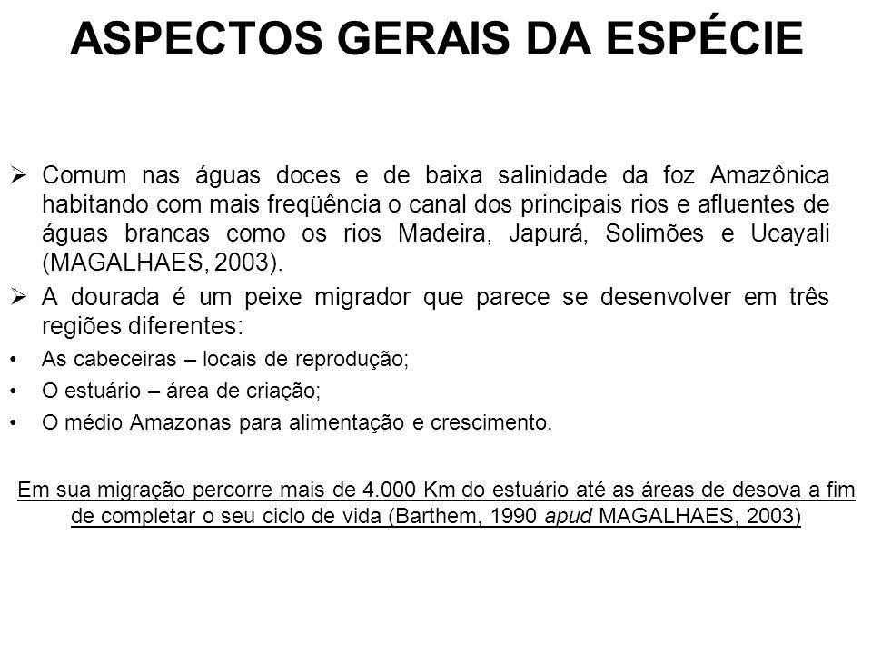ASPECTOS GERAIS DA ESPÉCIE Comum nas águas doces e de baixa salinidade da foz Amazônica habitando com mais freqüência o canal dos principais rios e afluentes de águas brancas como os rios Madeira, Japurá, Solimões e Ucayali (MAGALHAES, 2003).