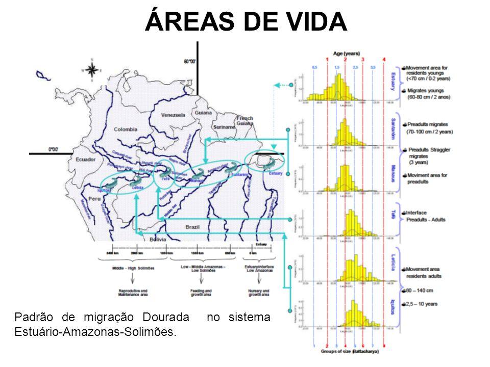 ÁREAS DE VIDA Padrão de migração Dourada no sistema Estuário-Amazonas-Solimões.