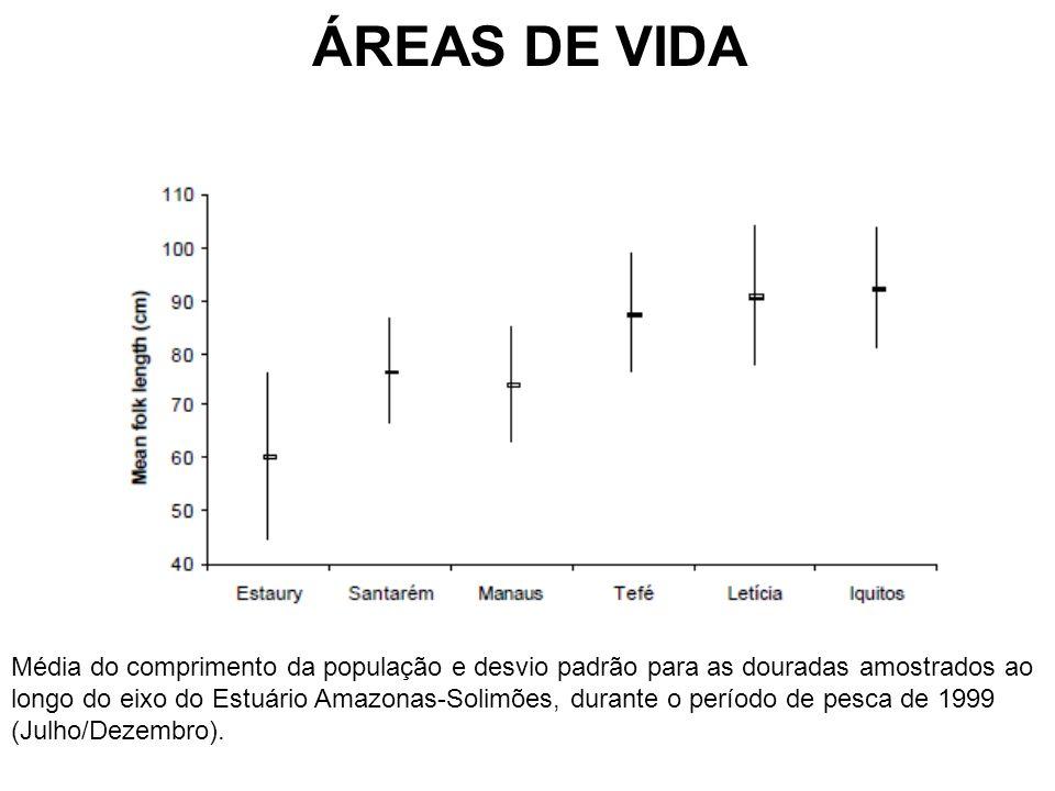 ÁREAS DE VIDA Média do comprimento da população e desvio padrão para as douradas amostrados ao longo do eixo do Estuário Amazonas-Solimões, durante o período de pesca de 1999 (Julho/Dezembro).