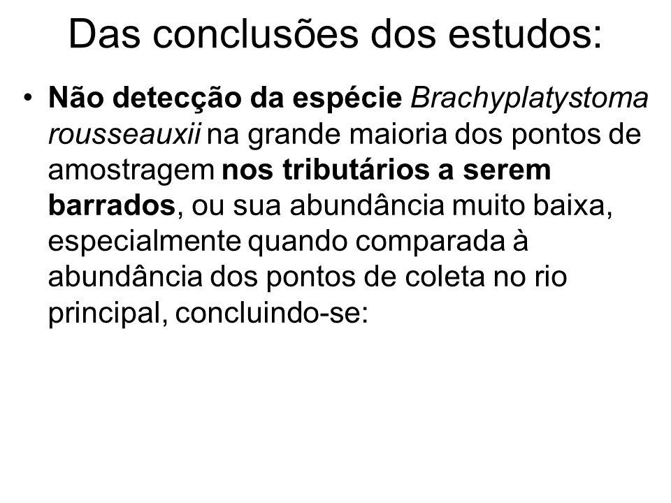 Das conclusões dos estudos: Não detecção da espécie Brachyplatystoma rousseauxii na grande maioria dos pontos de amostragem nos tributários a serem barrados, ou sua abundância muito baixa, especialmente quando comparada à abundância dos pontos de coleta no rio principal, concluindo-se: